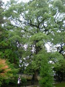 夫婦世界旅行-妻編-正連寺の木