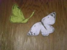 夫婦世界旅行-妻編-蝶々