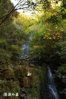 清流の森 ~九州の滝と風景~