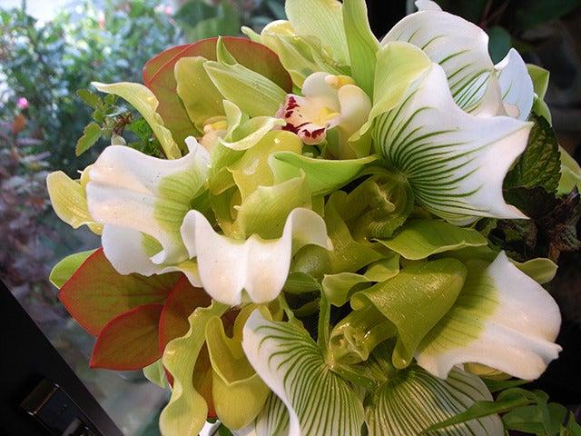 $ドゥジエム-flower and green life-