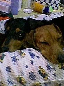 鬱と犬-P.jpg