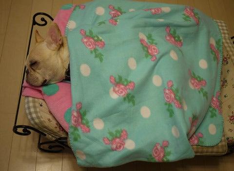yukiのワンコ生活