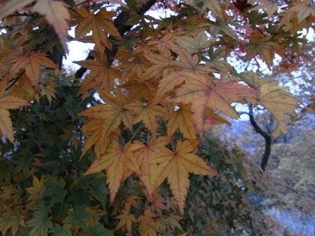 cinnamon log-Nov.29.09-5