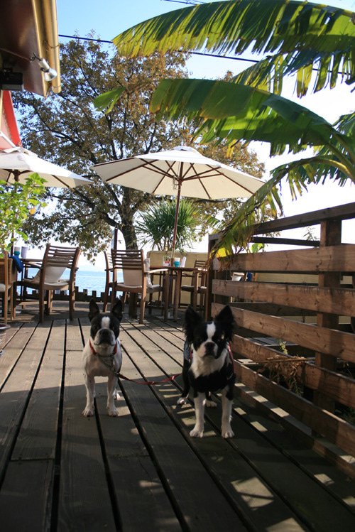 びわ湖湖畔に佇むドッグカフェの毎日