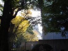 続 東京百景(BETA version)-#088 東京国立博物館の園路にて