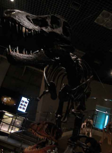 ちょんまげ通信-恐竜