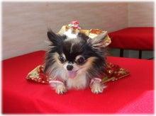 ☆Mirky Dog☆