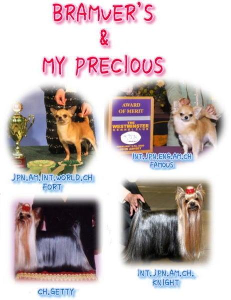 BRAMVER'S CHIHUAHUA  &  MY PRECIOUS YORKIE