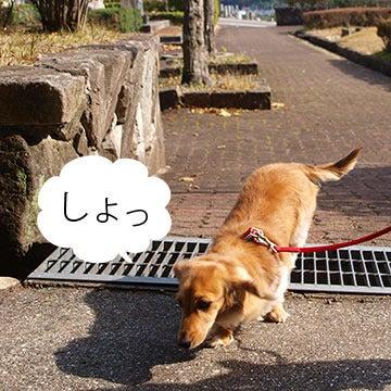 しおんさん☆Blog