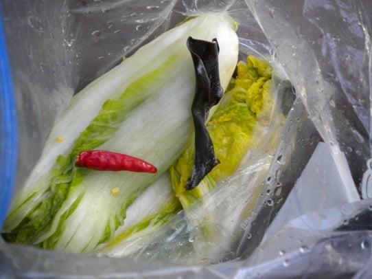 キヨミのガーデニングブログ-ジップロックで漬ける白菜漬けの画像