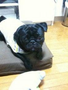 海くんママのブログ(黒パグ☆)-IMG_0208.jpg