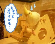 オカメのぱっち border=
