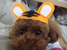 アロア☆リラックス-トラ帽子