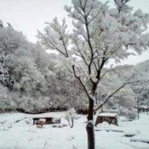 12月17日初雪、積…