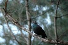 小笠原父島エコツアー情報    エコツーリズムの島        小笠原の旅情報と父島の自然-あかぽっぽ