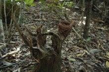 小笠原父島エコツアー情報    エコツーリズムの島        小笠原の旅情報と父島の自然-アート