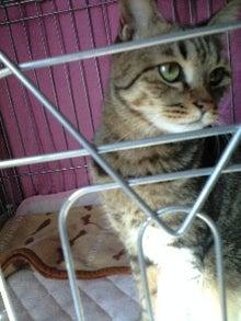 ずれずれブログ…湘南で猫と暮らせば…-091224_1201~0001.JPG