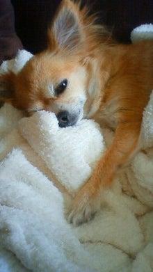 イヌとスローライフ-200912201242000.jpg