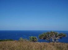 小笠原父島エコツアー情報    エコツーリズムの島        小笠原の旅情報と父島の自然-家内岬