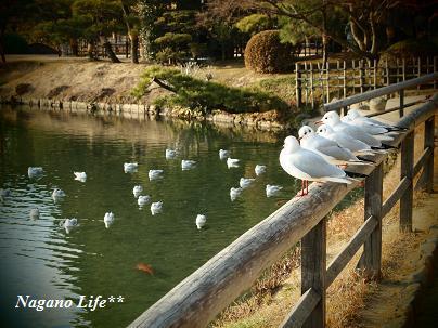 Nagano Life**-とり