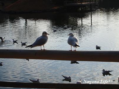 Nagano Life**-鳥