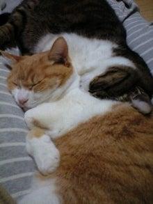 ずれずれブログ…湘南で猫と暮らせば…-091227_2144~0001.jpg