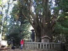 $歩き人ふみの徒歩世界旅行 日本・台湾編-一本杉