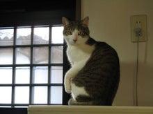 猫(クータくん)とコレクションで夢を