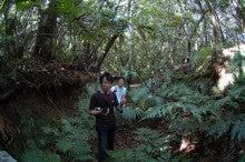 小笠原父島エコツアー情報    エコツーリズムの島        小笠原の旅情報と父島の自然-12030