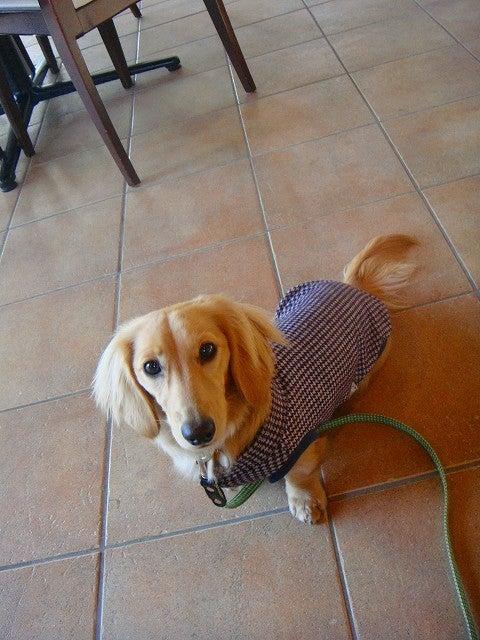 旅犬Lanileaのほほん風船記-DOG GARDEN RESORT