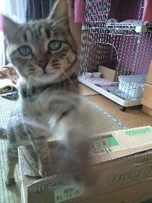 ずれずれブログ…湘南で猫と暮らせば…-CA390032-0001.JPG