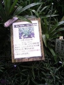 な~~るのコレがおすすめ-091129_1207~01.JPG