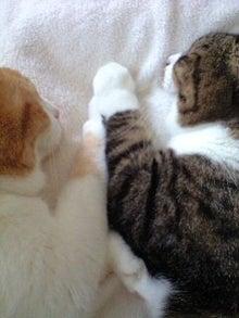 ずれずれブログ…湘南で猫と暮らせば…-CA390435-0001.JPG