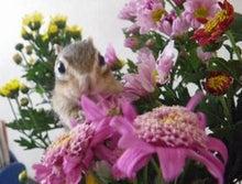 ビビのブログ-花好き