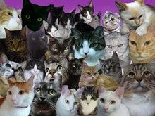 ♪すみン家の猫ニャンズ♪