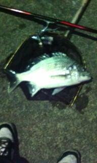 カバの釣りバカ日誌-20091225225929.jpg