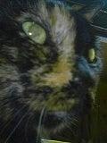 やす猫 なーくんのウチのコ日記