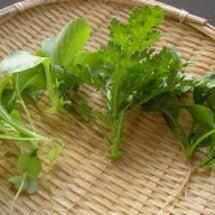 自家製野菜の七草粥&…