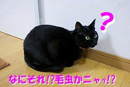 ~黒猫ティアラの楽しい毎日~
