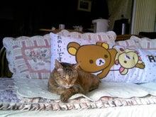 はるちゃんとお昼寝☆-TS381504.JPG