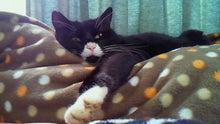 臣の野良猫仕事日記-201001131406000.jpg