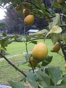 $だんだん×日常×アルバム。-レモンの木