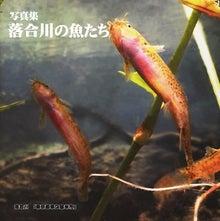 Zaccoの書棚-落合川の魚たち