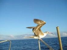 小笠原父島エコツアー情報    エコツーリズムの島        小笠原の旅情報と父島の自然-アカアシ