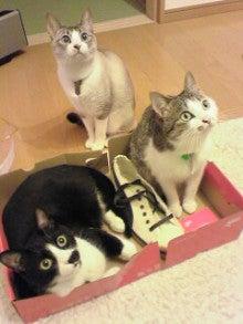 猫家族だにゃ~♪+わんっ☆