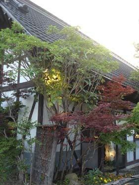 横浜発 驢馬人の美食な日々-Wabisuke01
