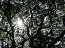 夫婦世界旅行-妻編-大きな樹
