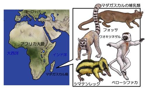 川崎悟司 オフィシャルブログ 古世界の住人 Powered by Ameba-マダガスカル島の動物