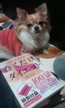 パピヨンとチワワ☆一緒の時間-100124_2155~02.jpg