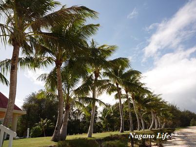 Nagano Life**-サイパン